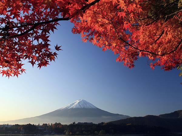 10.紅葉越しみ見る富士山を撮影した風情のある写真壁紙画像