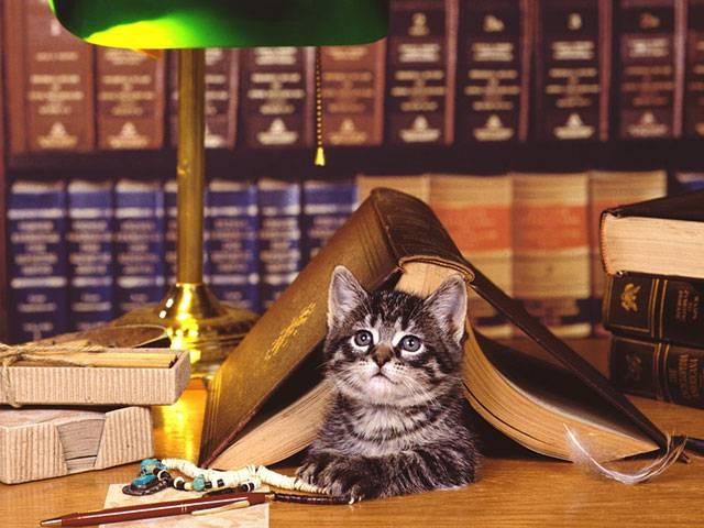 05.テーブルの上のランプと本と子猫の可愛い写真壁紙画像
