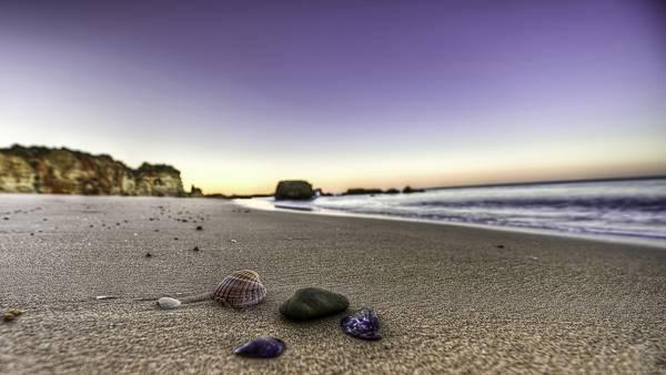 06.浜辺に落ちた貝殻を撮影した鮮やかな写真壁紙画像
