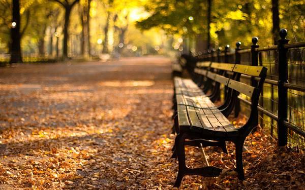 02.落ち葉の積もる公園のベンチを撮影した綺麗な写真壁紙画像