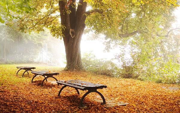 07.落ち葉の積もる霧がかった公園を撮影した爽やかな写真壁紙画像