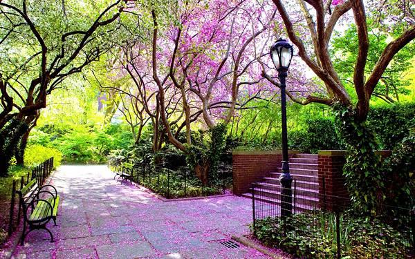 09.鮮やかなピンク色の花の咲く公園を撮影した写真壁紙画像