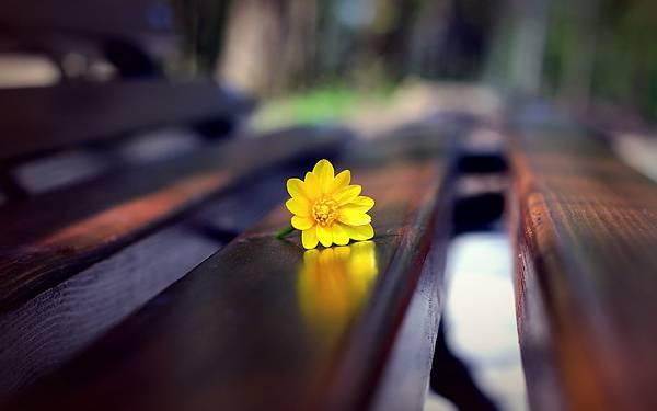 10.公園のベンチの上に置いた花を撮影した美しい写真壁紙画像