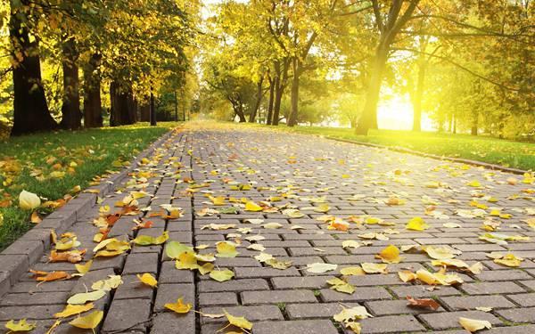 11.イチョウの葉の落ちた公園の道を撮影した綺麗な写真壁紙画像