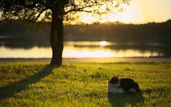 12.池のある公園でくつろぐ猫の可愛い写真壁紙画像
