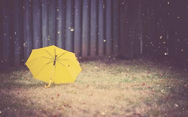 08.芝の上に落ちた黄色い傘と降り注ぐ雨粒のおしゃれな写真壁紙画像