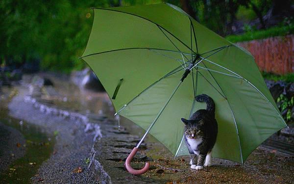 09.道端の傘の中で雨宿りする猫の可愛い写真壁紙画像