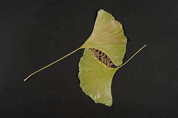 葉っぱを刺繍して作る精巧なアート作品 - 04