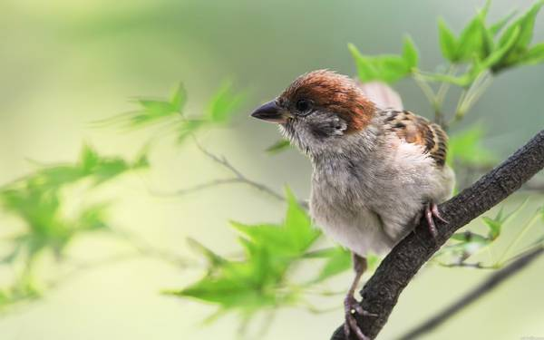 01.木に止まった雀の横顔を撮影した可愛い写真壁紙画像