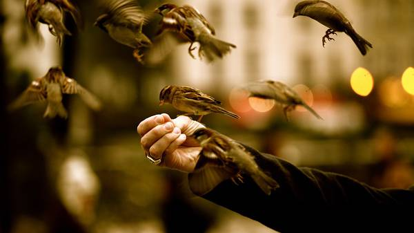 05.スズメに餌をあげる人の手元を撮影した写真壁紙画像