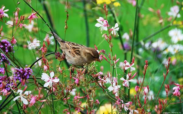 08.小さな花の枝に止まる雀を撮影した綺麗な写真壁紙画像