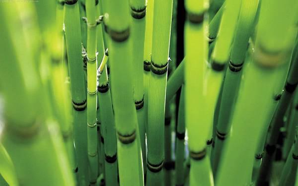 02.透き通ったグリーンの竹をアップで撮影した綺麗な写真壁紙画像