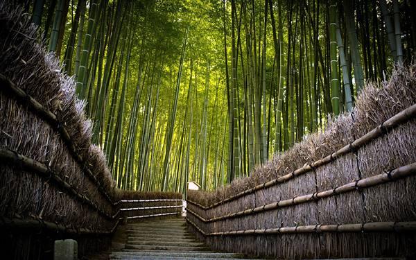 04.竹林の中の階段の道を撮影した風情のある写真壁紙画像
