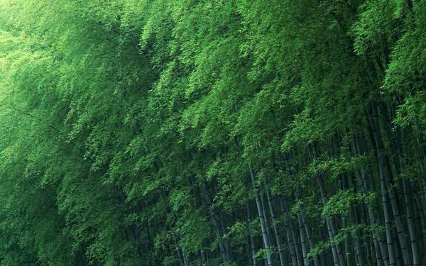 06.まっすぐに伸びた竹林を撮影した爽やかな写真壁紙画像