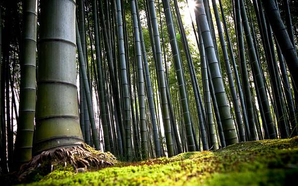 07.竹林をローアングルで撮影した風情のある写真壁紙画像