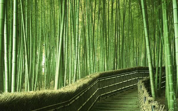 08.見渡すかぎりの竹林とその中の道を撮影した美しい写真壁紙画像