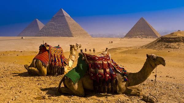 01.砂漠に座るらくだとピラミッドを撮影した写真壁紙画像