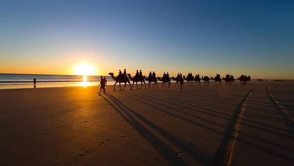 05.海辺の砂漠を歩くラクダの行列の美しい写真壁紙画像