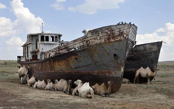 10.古びた船の影で休むらくだ達を撮影した写真壁紙画像