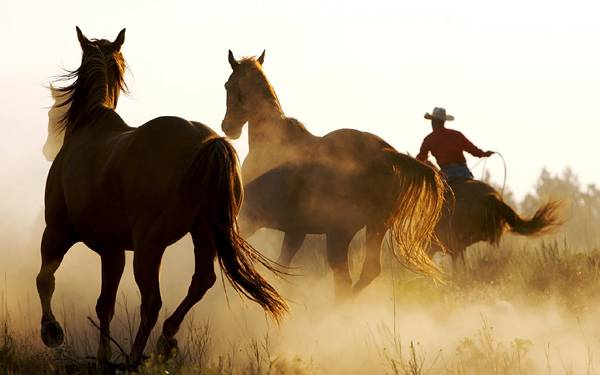 05.三匹の馬とカウボーイを後ろから撮影した高画質な写真壁紙画像