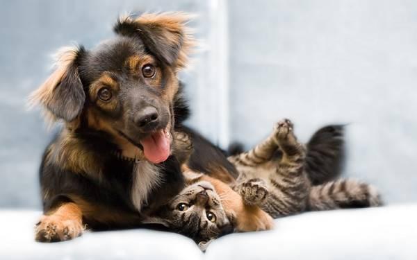 01.ソファーの上で仲の良さそうな犬と猫の写真壁紙画像