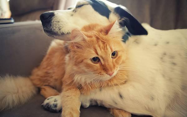 03.ソファーの上で仲良く抱き合う猫と犬の可愛い写真壁紙画像