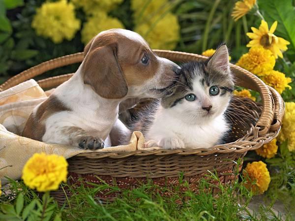 04.かごの中の子猫と子犬の綺麗な写真壁紙画像