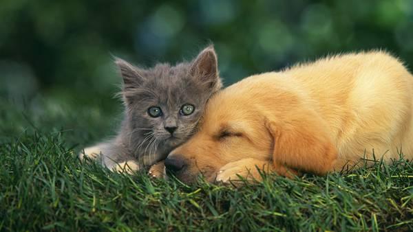 05.草の上で顔を寄せ合う犬と猫の可愛い写真壁紙画像