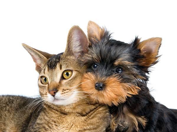 06.顔を寄せ合う猫と犬の綺麗な写真壁紙画像