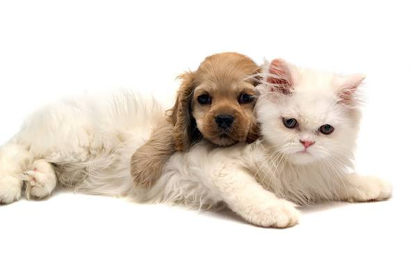 07.毛の長い白猫と茶色い子犬の可愛い写真壁紙画像