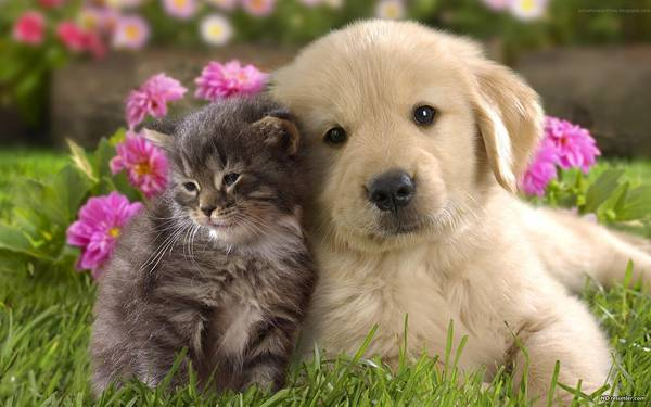 10.顔を寄せあって嬉しそうな表情の子猫と子犬の写真壁紙画像