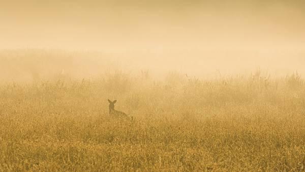 08.草むらの中のカンガルーの影を撮影した写真壁紙画像