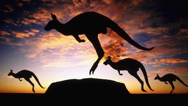 09.夕焼けとジャンプするカンガルーのシルエットの綺麗な写真壁紙画像