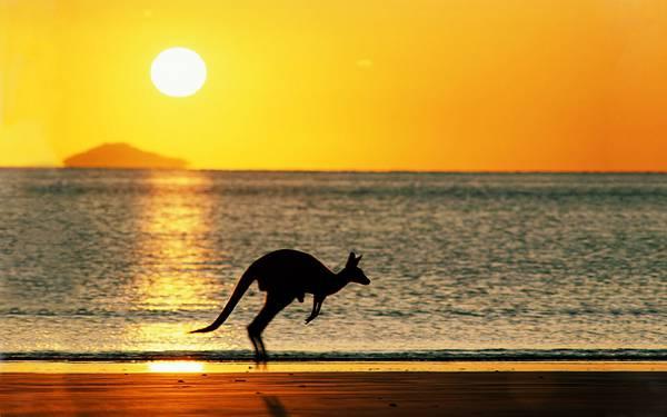 10.海辺の夕日とカンガルーのシルエットの写真壁紙画像