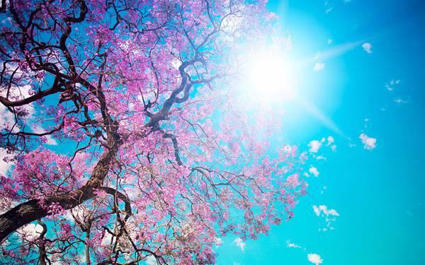 03.鮮やかな青空と桜のピンクが美しい写真壁紙画像
