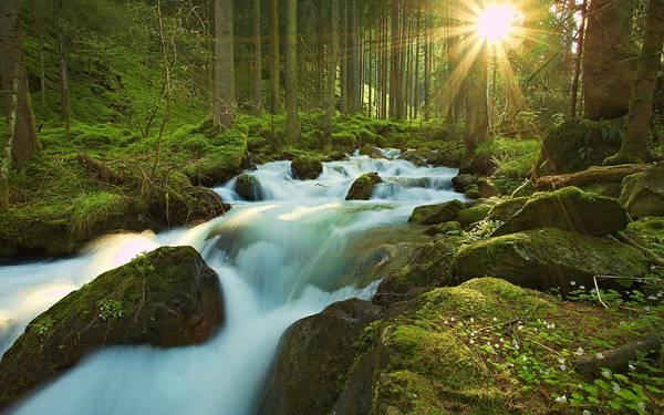 09.森の中に流れる美しい川と太陽の光の写真壁紙画像