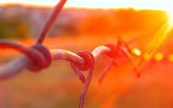 10.夕日の鮮やかなオレンジに染まる金網の綺麗な写真壁紙画像