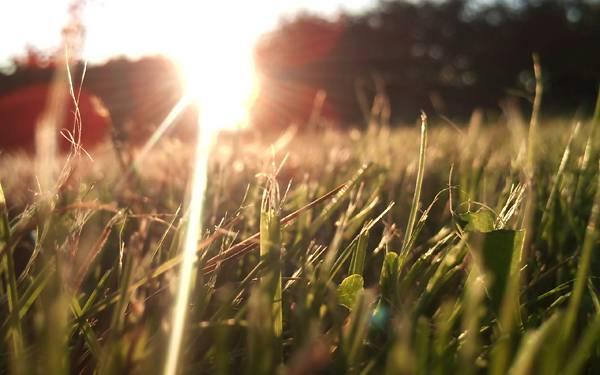 11.草を照らす太陽のレンズフレアを撮影した綺麗な写真壁紙画像