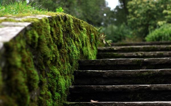 06.石段と苔をアップで撮影した綺麗な写真壁紙画像
