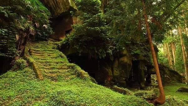 10.森のなかの古びた石段を撮影した美しい写真壁紙画像