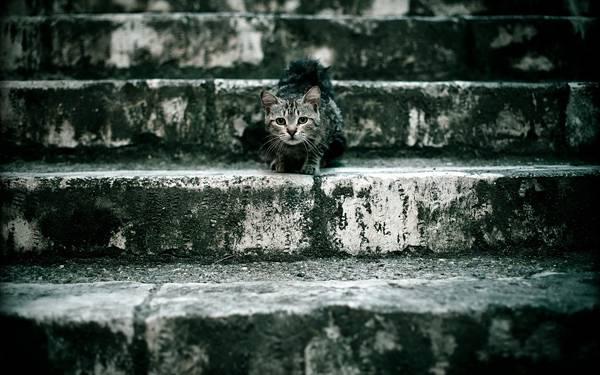 12.石段の上の猫を撮影した可愛い写真壁紙画像