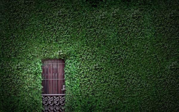 01.一面葉に囲まれた壁のドアを撮影した綺麗な写真壁紙画像
