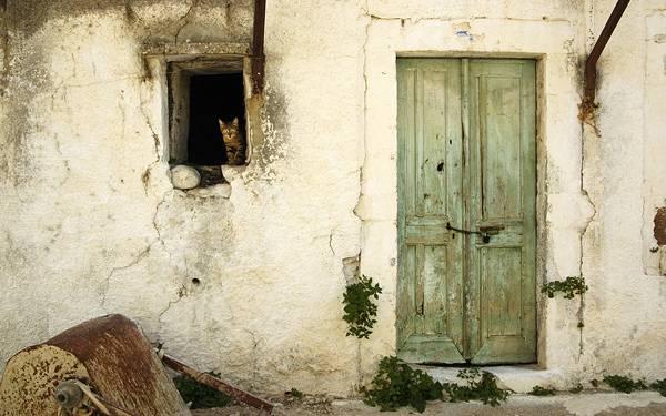 05.古びた家のドアと窓から覗く猫の可愛い写真壁紙画像