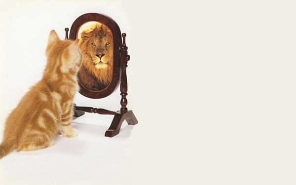 12.鏡の中では自分をライオンだと思っている猫の可愛い写真壁紙画像