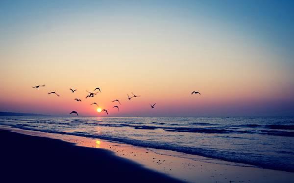09.夕日の中を飛ぶ海辺の鳥達を撮影した美しい写真壁紙画像