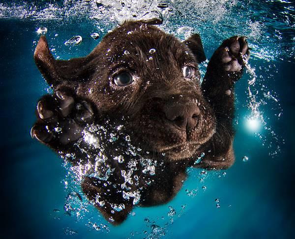 元気な子犬達の水中写真に癒やされる! - 01