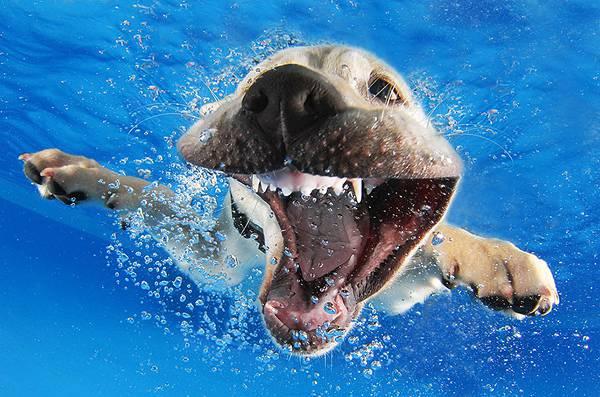 元気な子犬達の水中写真に癒やされる! - 02
