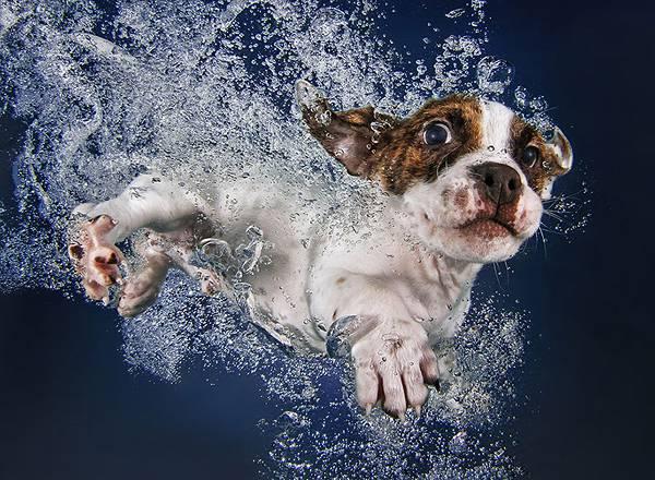 元気な子犬達の水中写真に癒やされる! - 03