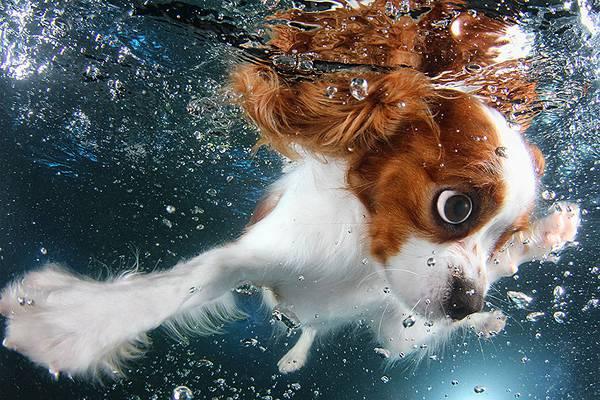 元気な子犬達の水中写真に癒やされる! - 04