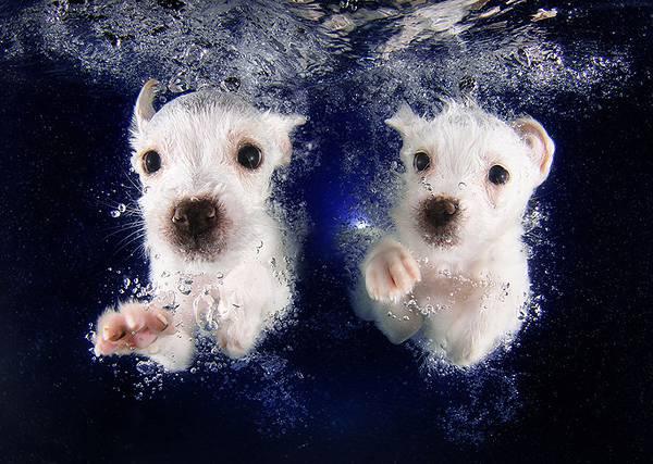 元気な子犬達の水中写真に癒やされる! - 05
